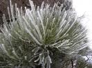 teide_nationalpark_winter_www.inselteneriffa.com-22