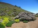teide_nationalpark_www.inselteneriffa.com-32