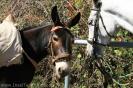 Tierweihe_la_orotava_2008_www.inselteneriffa.com-32