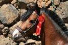 Tierweihe_la_orotava_2008_www.inselteneriffa.com-41