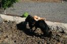 Tierweihe_la_orotava_2008_www.inselteneriffa.com-50