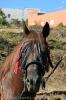 Tierweihe_la_orotava_2008_www.inselteneriffa.com-72