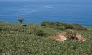 wanderweg_rambla_del_castro_www.inselteneriffa.com-2